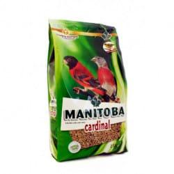 Manitoba Cardinal-alimento per uccelli cardinalini