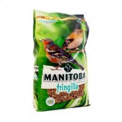 Manitoba Fringilla-alimento per uccelli fringilla