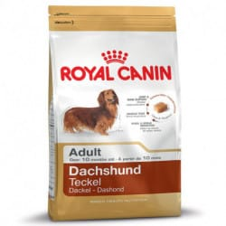 Royal Canin Dachshund Adult alimento secco per cani