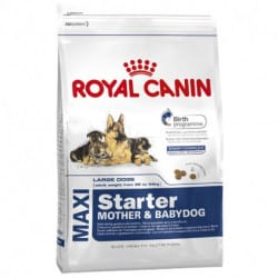 Royal Canin Maxi Starter Mother & Babydog alimento secco per cani